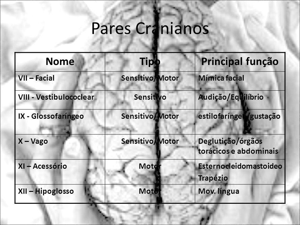 Pares Cranianos Nome Tipo Principal função VII – Facial