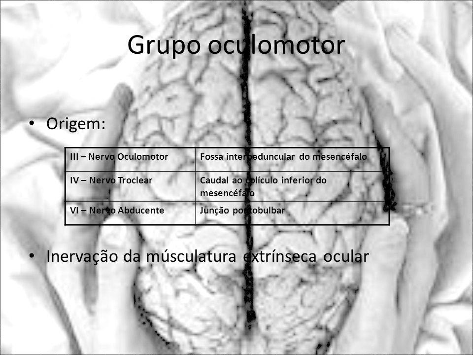 Grupo oculomotor Origem: Inervação da músculatura extrínseca ocular