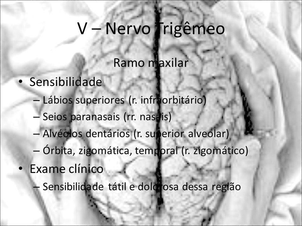 V – Nervo Trigêmeo Ramo maxilar Sensibilidade Exame clínico