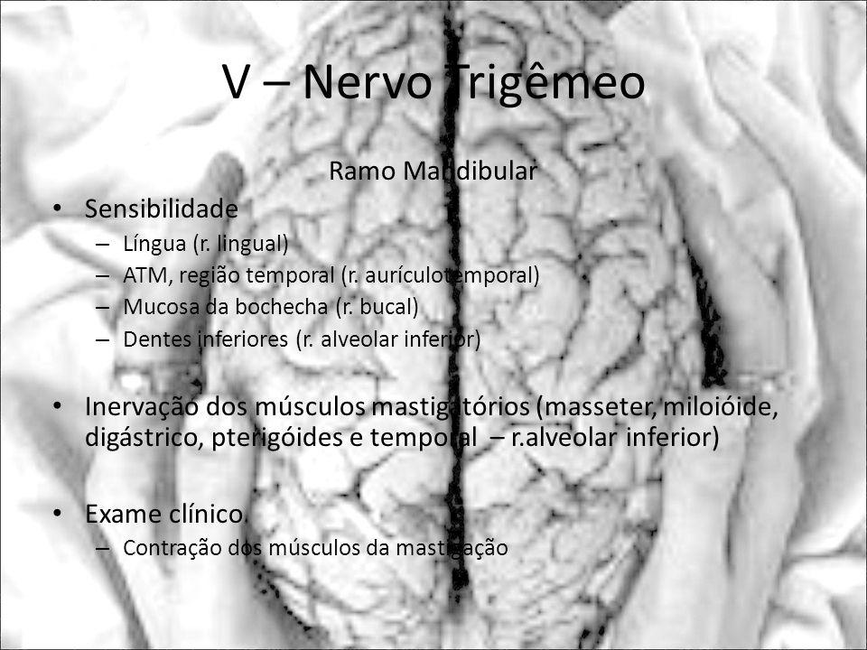 V – Nervo Trigêmeo Ramo Mandibular Sensibilidade