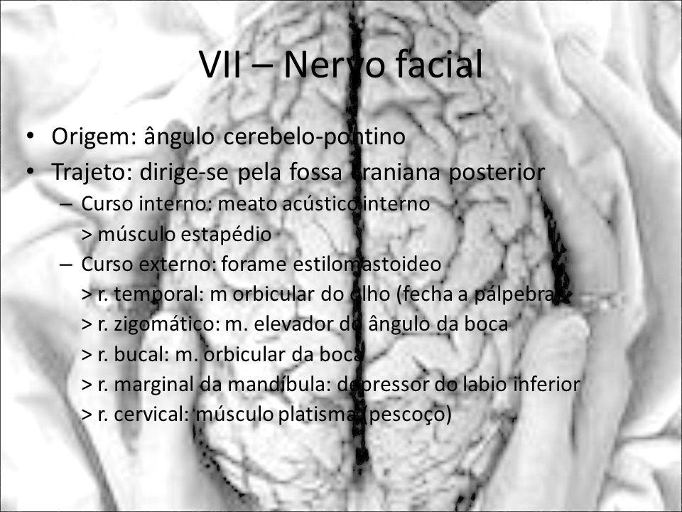 VII – Nervo facial Origem: ângulo cerebelo-pontino