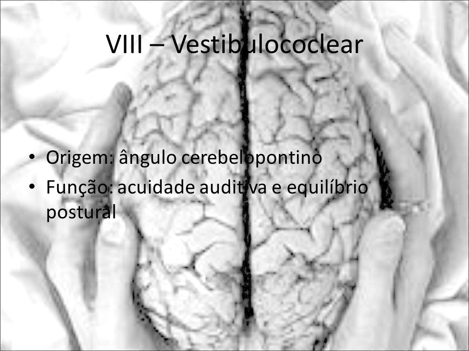 VIII – Vestibulococlear