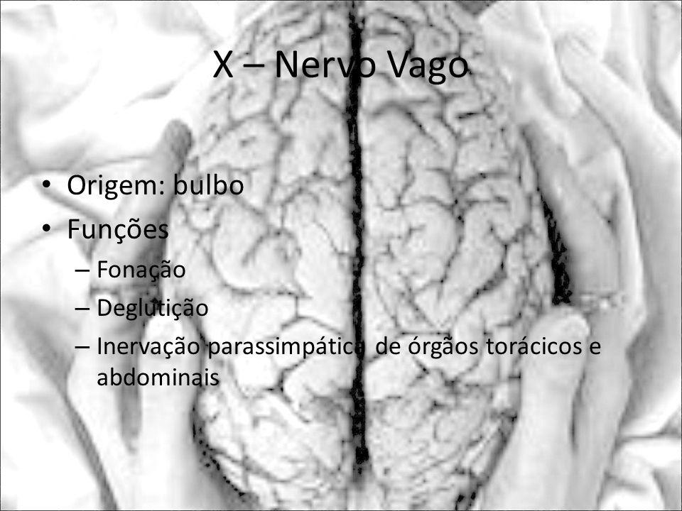X – Nervo Vago Origem: bulbo Funções Fonação Deglutição