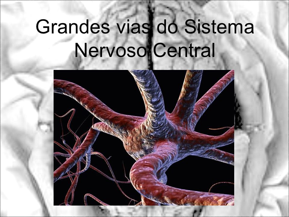 Grandes vias do Sistema Nervoso Central