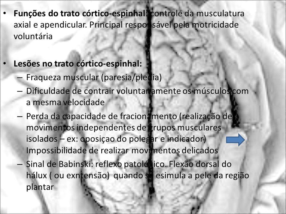 Lesões no trato córtico-espinhal: Fraqueza muscular (paresia/pledia)