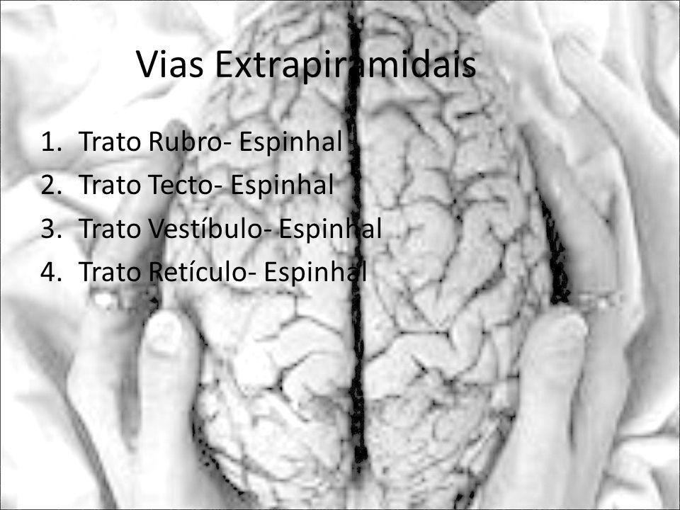 Vias Extrapiramidais Trato Rubro- Espinhal Trato Tecto- Espinhal