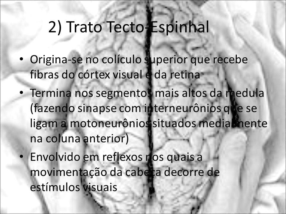 2) Trato Tecto-Espinhal