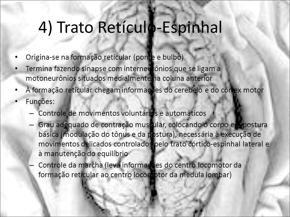 4) Trato Retículo-Espinhal