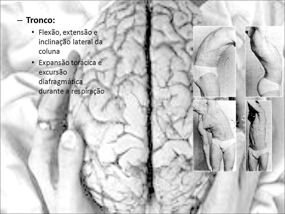Tronco: Flexão, extensão e inclinação lateral da coluna