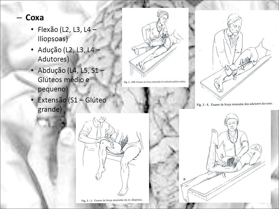 Coxa Flexão (L2, L3, L4 – Iliopsoas) Adução (L2, L3, L4 – Adutores)