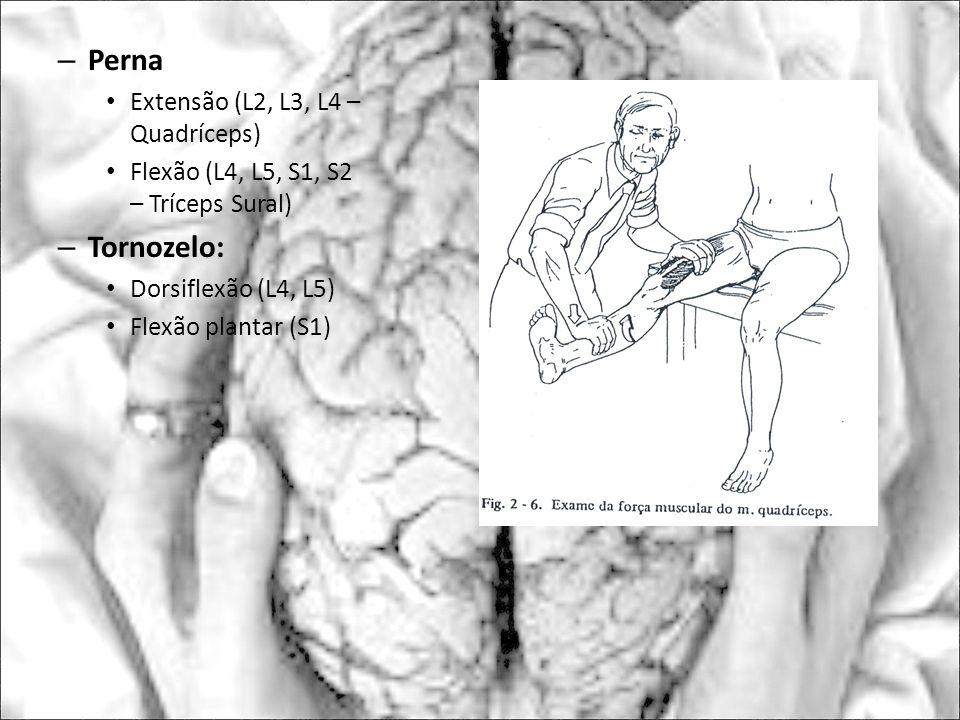 Perna Tornozelo: Extensão (L2, L3, L4 – Quadríceps)