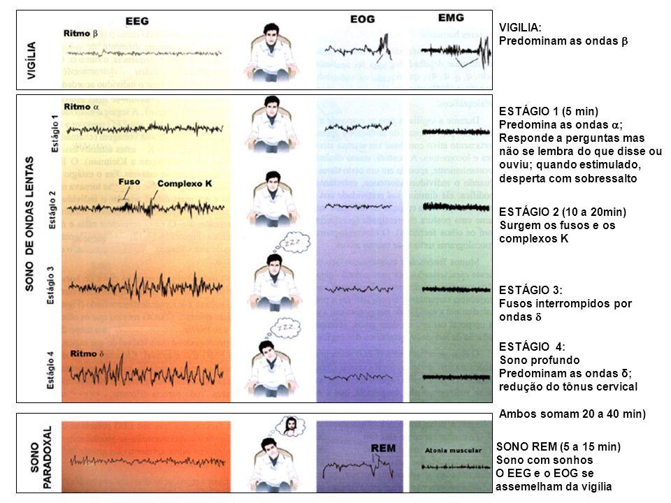 VIGILIA:Predominam as ondas b. ESTÁGIO 1 (5 min) Predomina as ondas ;