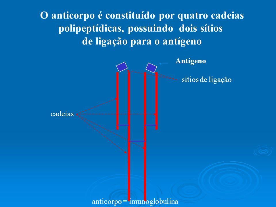 polipeptídicas, possuindo dois sítios de ligação para o antígeno