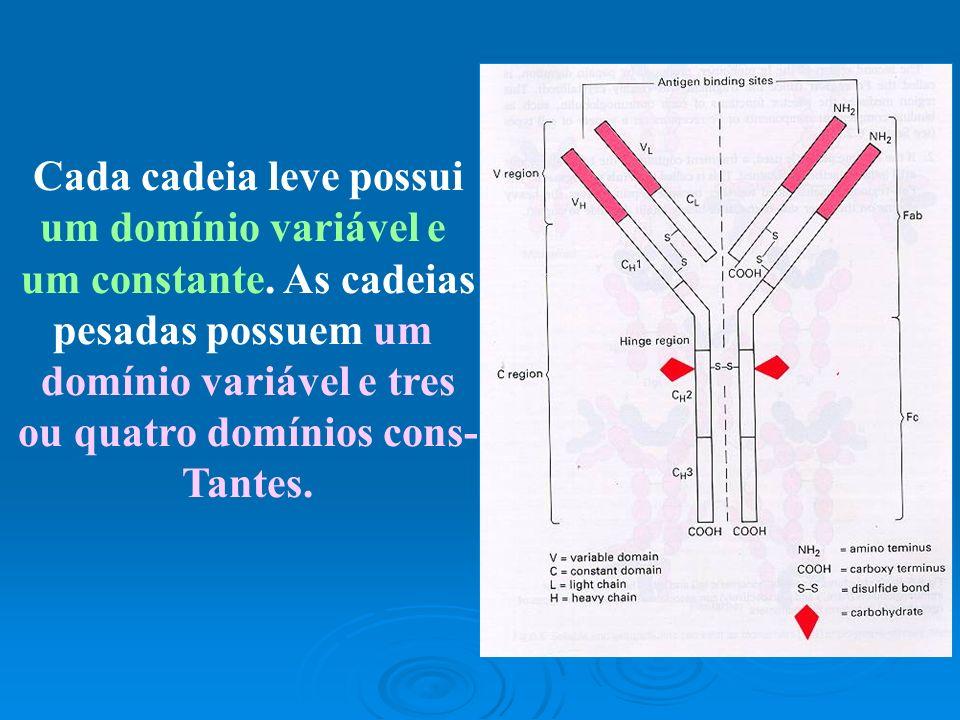 Cada cadeia leve possui um domínio variável e um constante. As cadeias