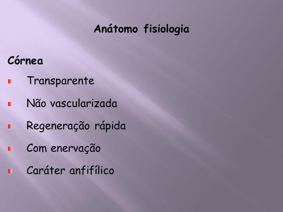 Anátomo fisiologia Córnea. Transparente. Não vascularizada.