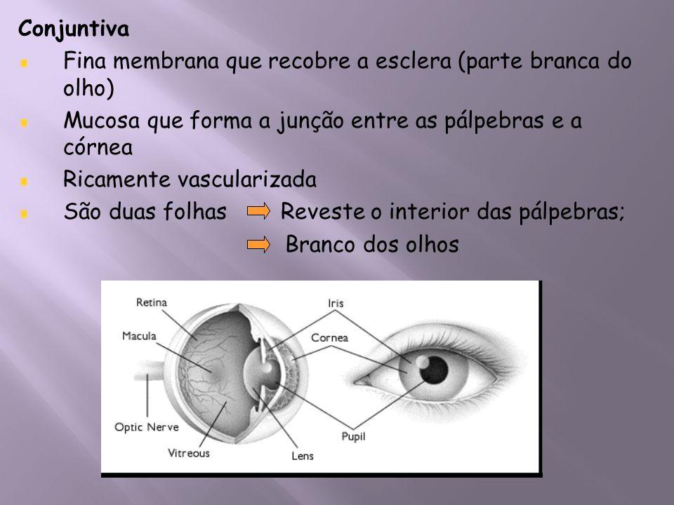 Conjuntiva Fina membrana que recobre a esclera (parte branca do olho) Mucosa que forma a junção entre as pálpebras e a córnea.
