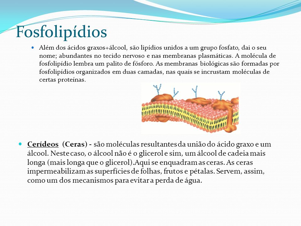 Fosfolipídios