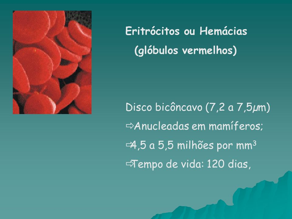 Eritrócitos ou Hemácias