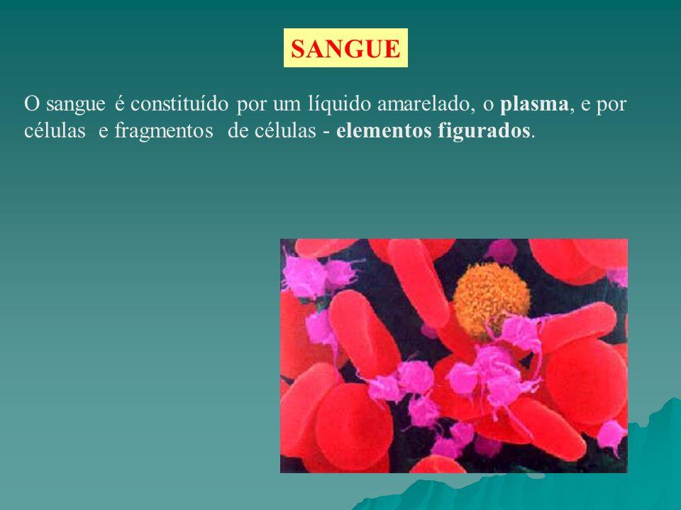 SANGUE O sangue é constituído por um líquido amarelado, o plasma, e por células e fragmentos de células - elementos figurados.