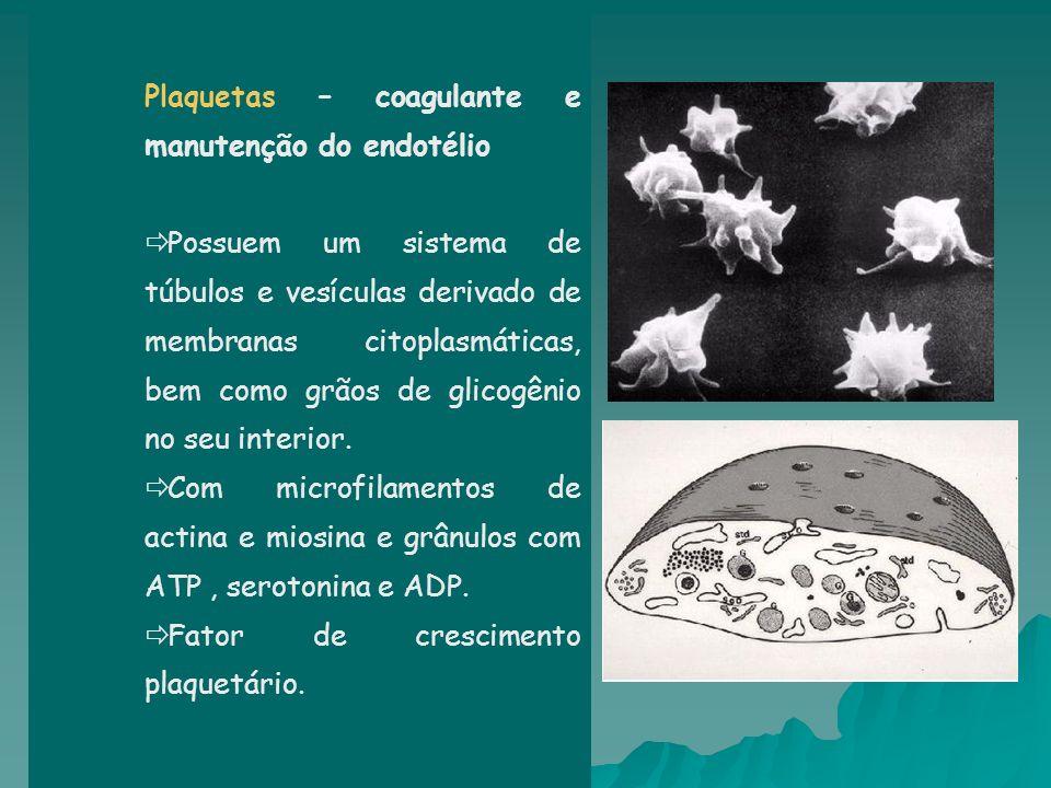 Plaquetas – coagulante e manutenção do endotélio