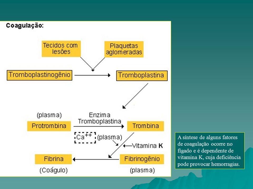 A síntese de alguns fatores de coagulação ocorre no fígado e é dependente de vitamina K, cuja deficiência pode provocar hemorragias.