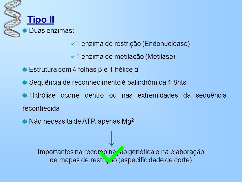 Tipo II Duas enzimas: 1 enzima de restrição (Endonuclease)