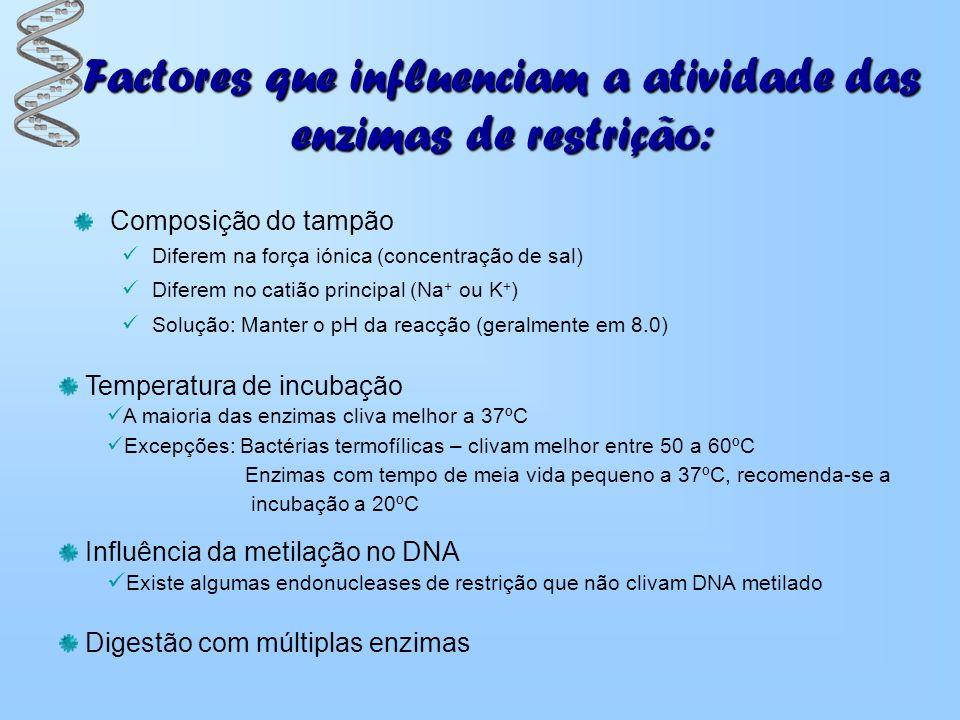Factores que influenciam a atividade das enzimas de restrição: