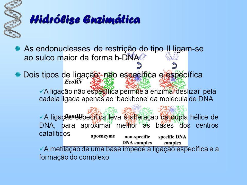 Hidrólise Enzimática As endonucleases de restrição do tipo II ligam-se ao sulco maior da forma b-DNA.