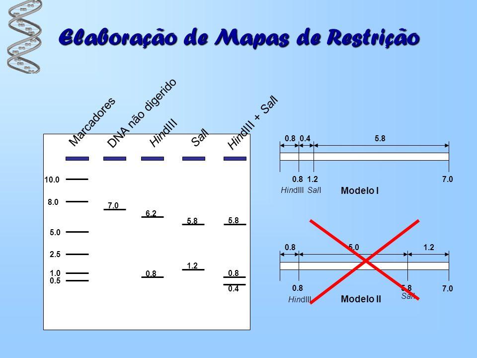 Elaboração de Mapas de Restrição