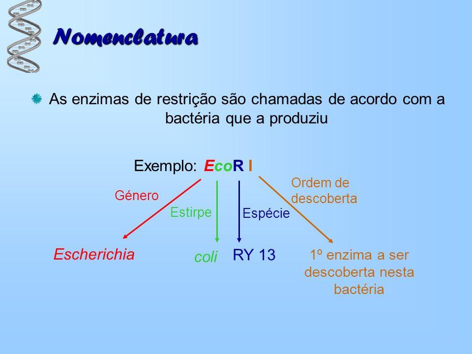 1º enzima a ser descoberta nesta bactéria
