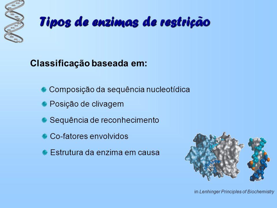 Tipos de enzimas de restrição