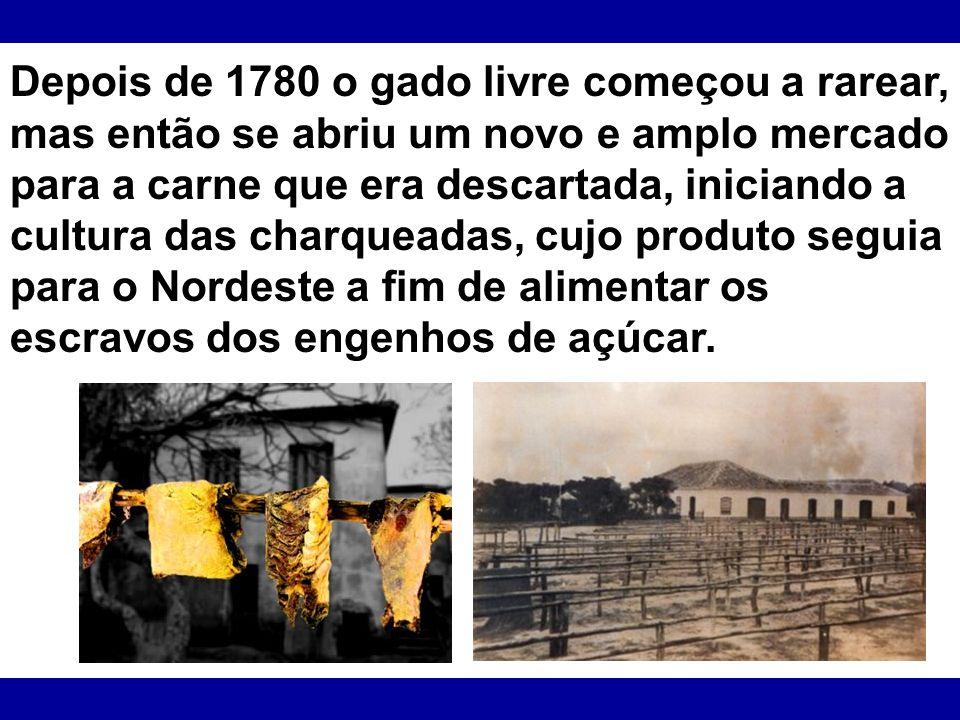 Depois de 1780 o gado livre começou a rarear, mas então se abriu um novo e amplo mercado para a carne que era descartada, iniciando a cultura das charqueadas, cujo produto seguia para o Nordeste a fim de alimentar os escravos dos engenhos de açúcar.