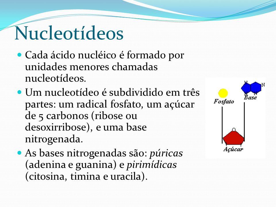 Nucleotídeos Cada ácido nucléico é formado por unidades menores chamadas nucleotídeos.