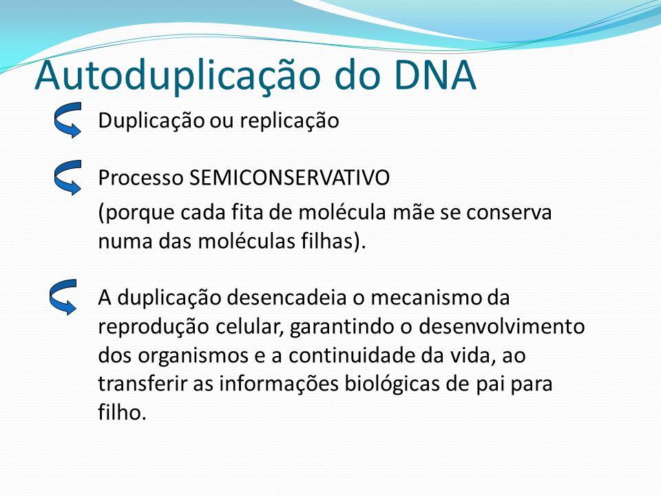 Autoduplicação do DNA Duplicação ou replicação