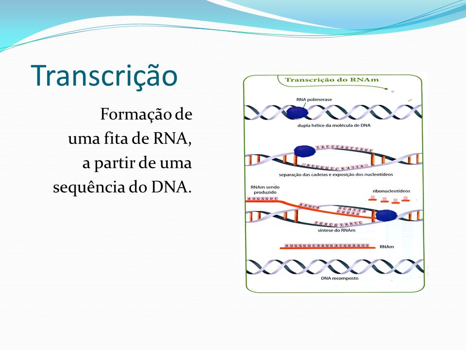 Transcrição Formação de uma fita de RNA, a partir de uma