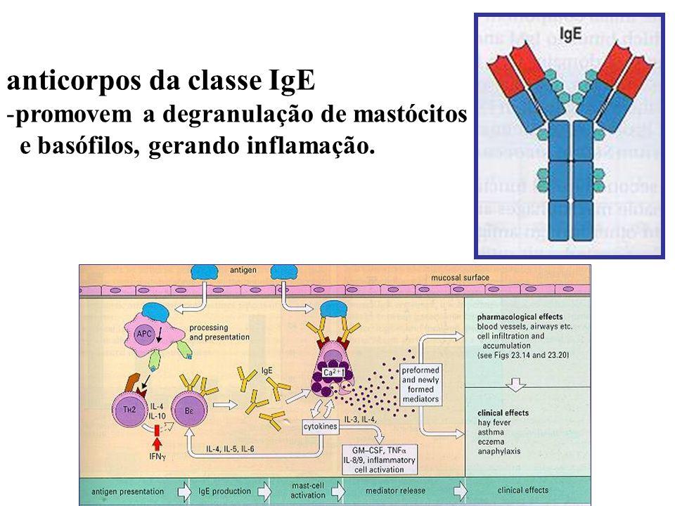 anticorpos da classe IgE