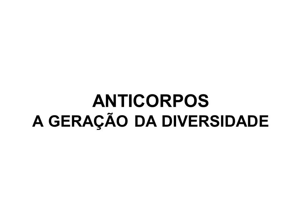 ANTICORPOS A GERAÇÃO DA DIVERSIDADE