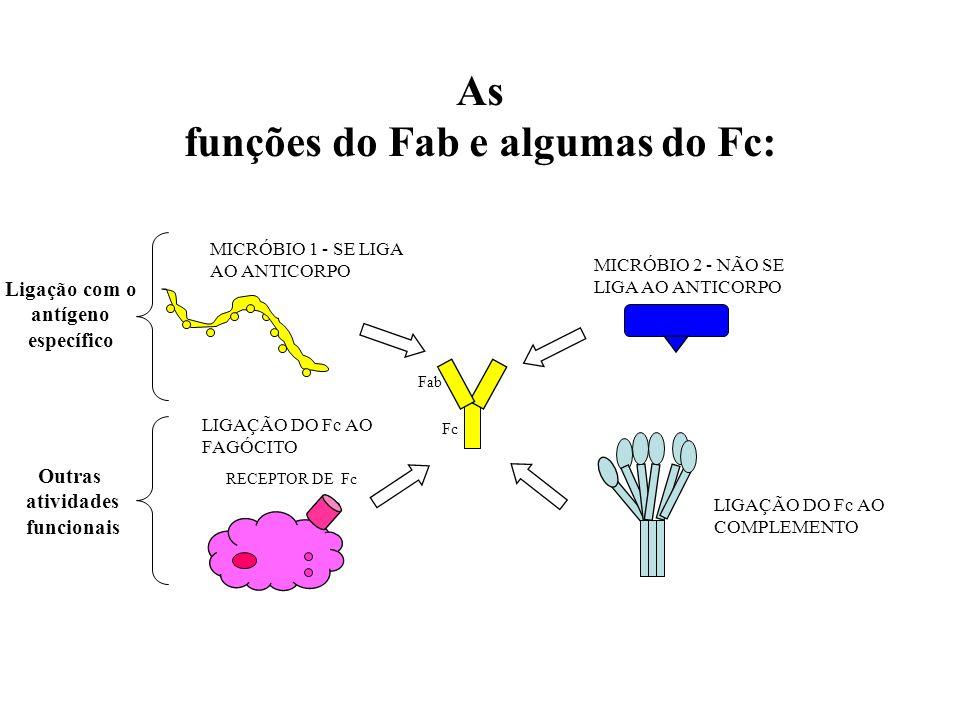 funções do Fab e algumas do Fc: