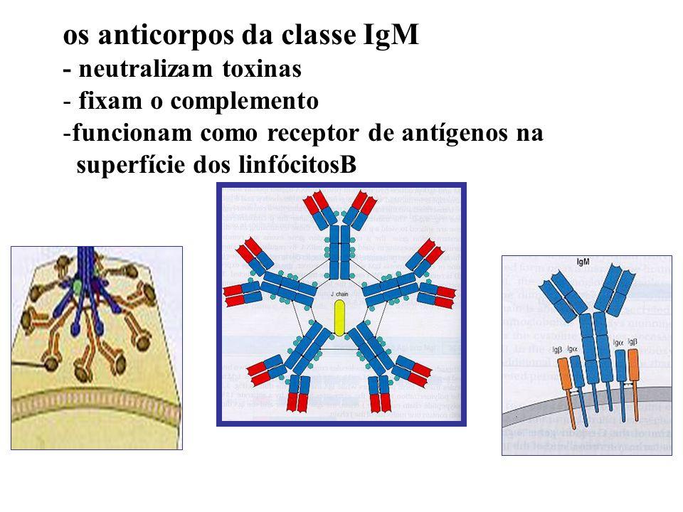 os anticorpos da classe IgM
