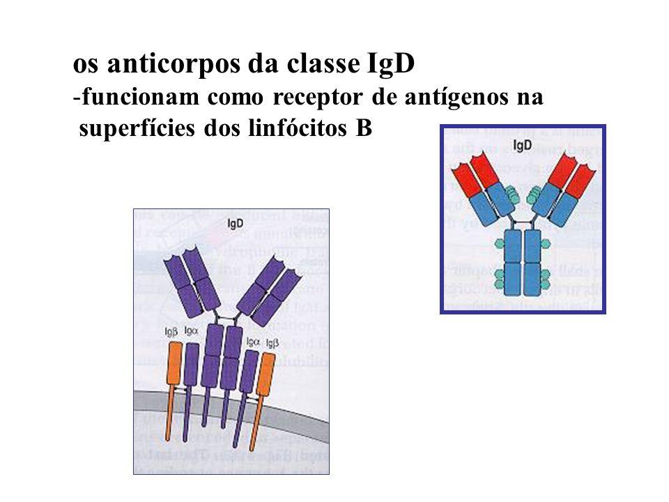 os anticorpos da classe IgD