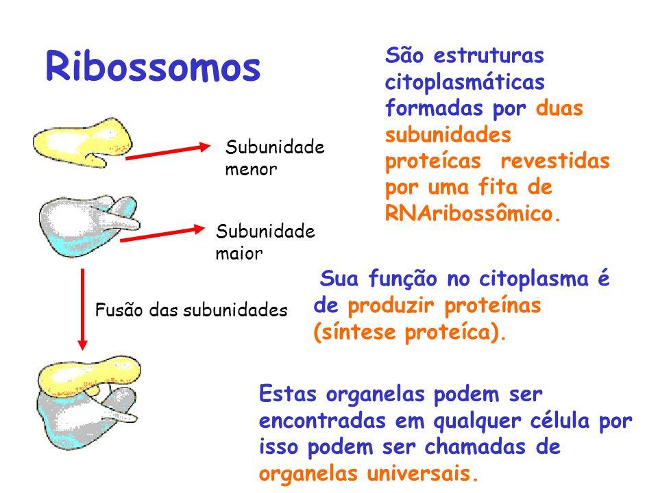Ribossomos São estruturas citoplasmáticas formadas por duas subunidades proteícas revestidas por uma fita de RNAribossômico.