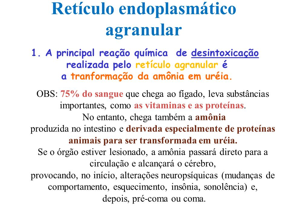 Retículo endoplasmático agranular