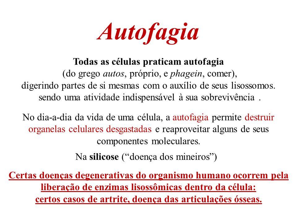 Autofagia Todas as células praticam autofagia