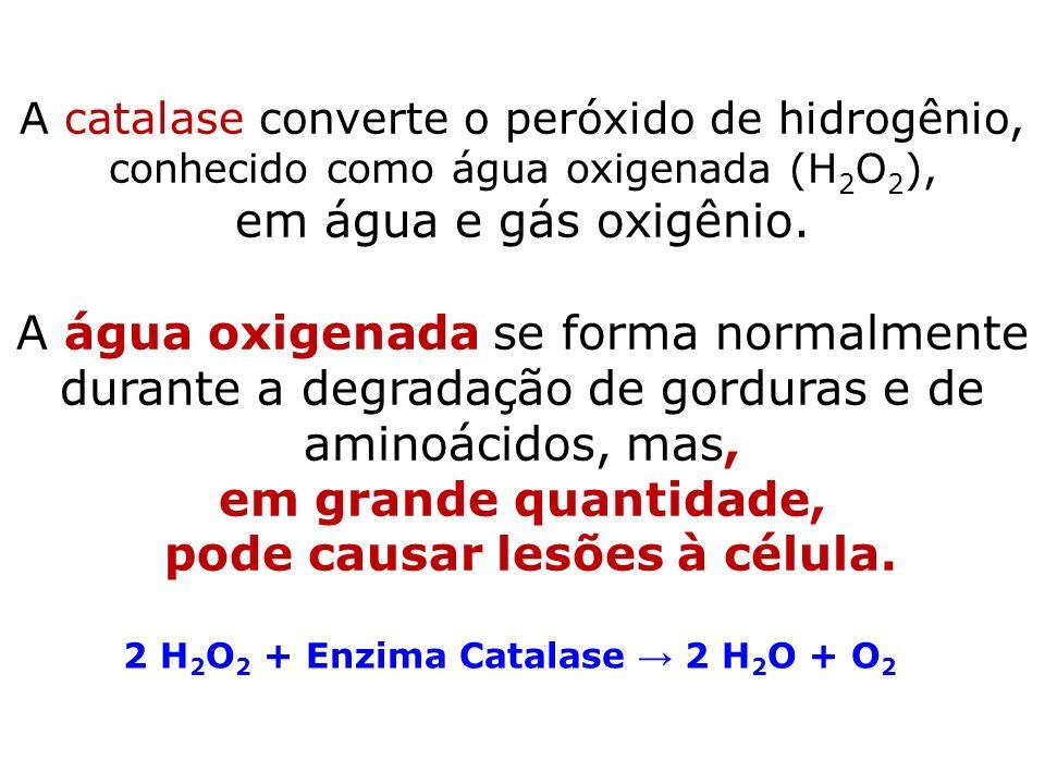 pode causar lesões à célula. 2 H2O2 + Enzima Catalase → 2 H2O + O2