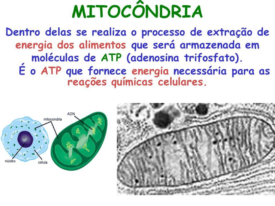 MITOCÔNDRIA