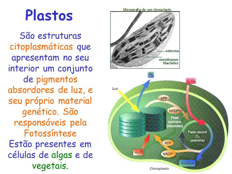 Estão presentes em células de algas e de vegetais.