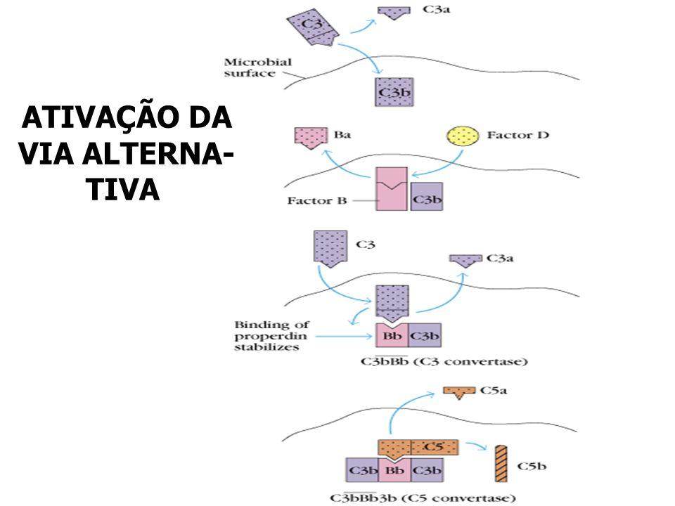 ATIVAÇÃO DA VIA ALTERNA- TIVA