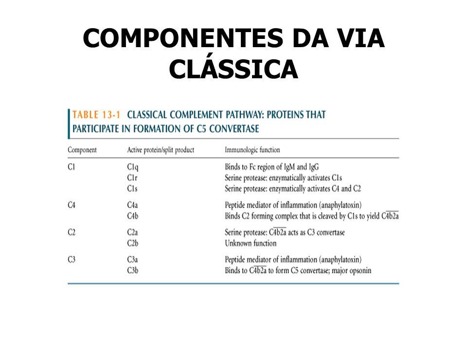 COMPONENTES DA VIA CLÁSSICA