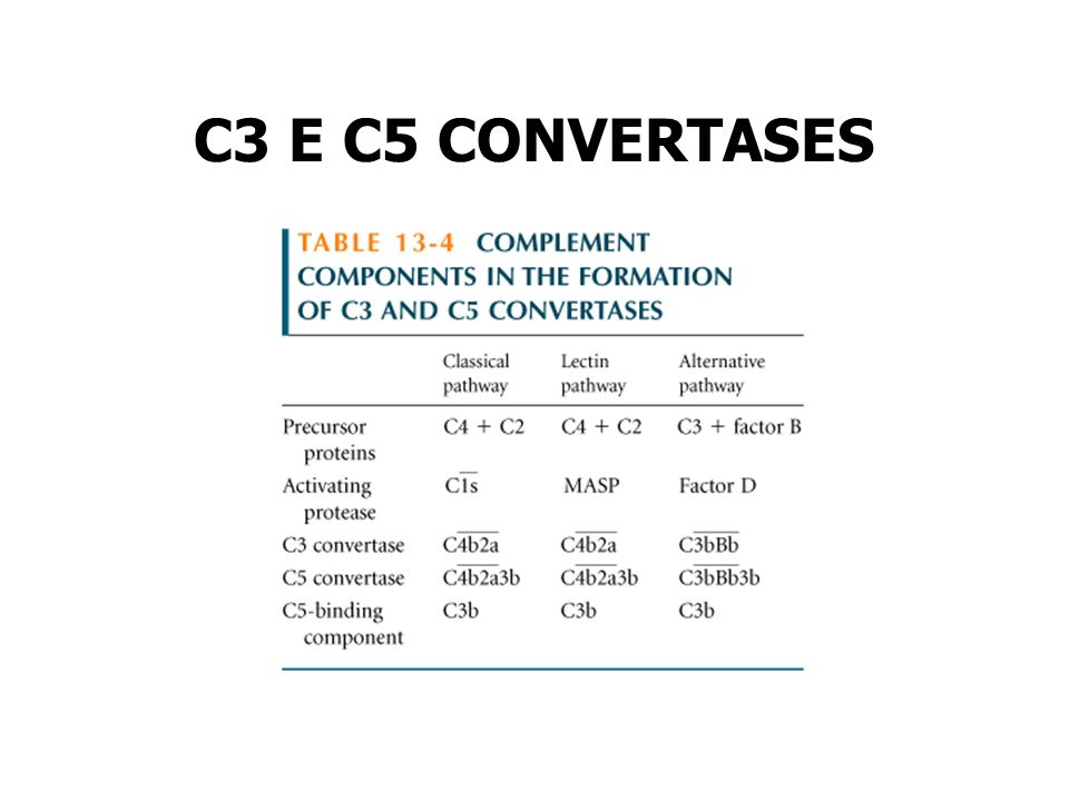 C3 E C5 CONVERTASES