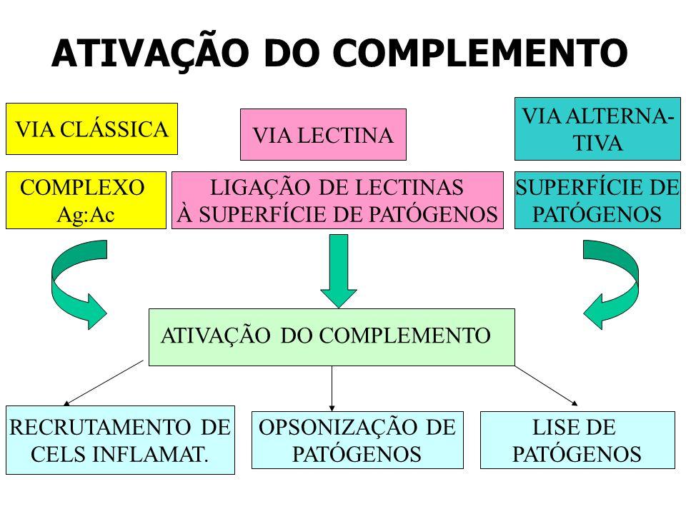 ATIVAÇÃO DO COMPLEMENTO